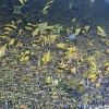 Schwarz-Gelbe Dortmunder Südtribüne